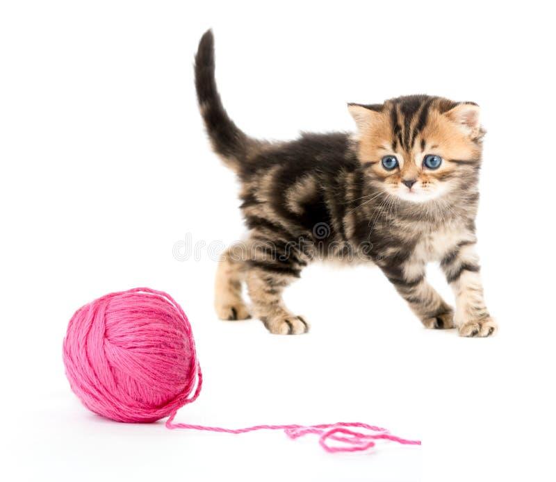 Het Britse katje dat van de gestreepte kat rode clew of bal speelt royalty-vrije stock afbeeldingen