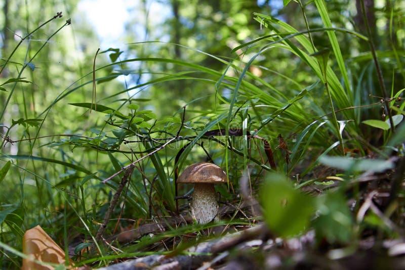 Het brood van de eekhoorn in bos stock afbeeldingen