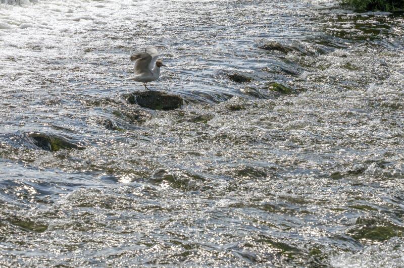 Het broodje, de rivier die over de rotsen met grote kracht stromen royalty-vrije stock foto's