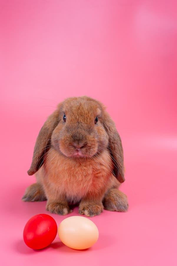 Het bruine verblijf van het konijntjeskonijn achter paaseieren met roze ruimte als achtergrond en exemplaar royalty-vrije stock foto