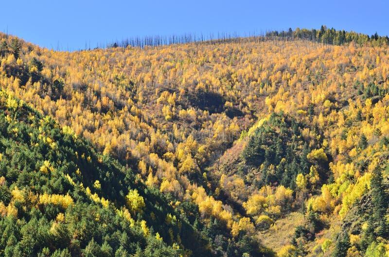 Het bueatiful de herfstlandschap van Berghelling in Yading stock foto