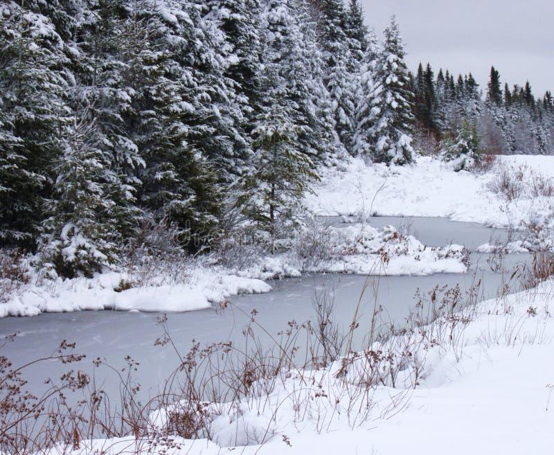 Het buigen, de winters, stroom stock foto's