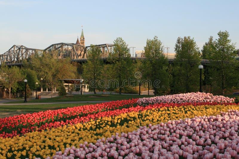 Het Canadese Festival van de Tulp stock afbeeldingen