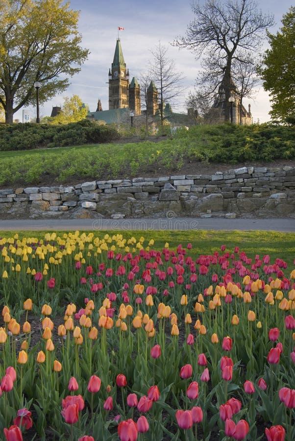 Het Canadese Parlement tijdens het Tulpenfestival stock afbeeldingen
