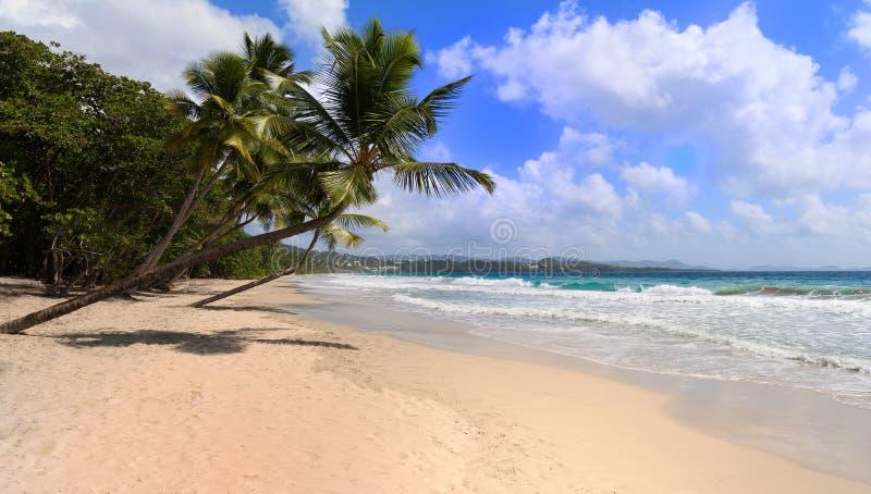 Het Caraïbische strand, het eiland van Martinique royalty-vrije stock foto's