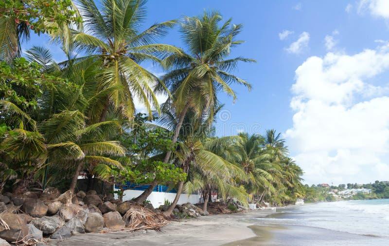 Het Caraïbische strand, het eiland van Martinique, Frankrijk, de Franse Antillen stock afbeelding