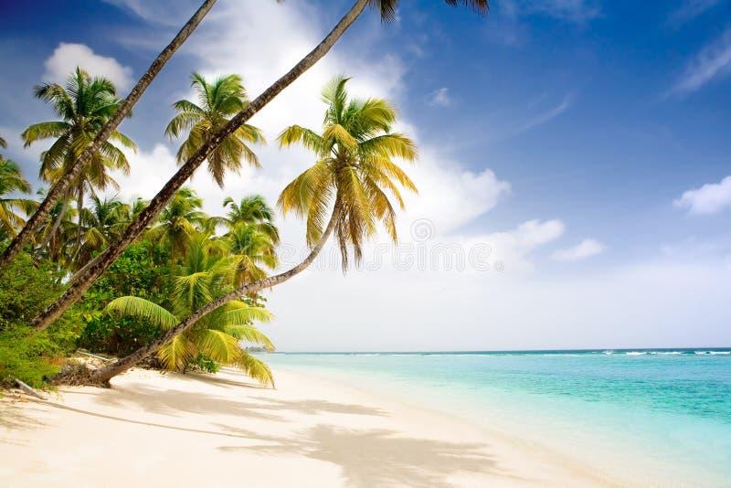 Het Caraïbische strand van het paradijs stock foto's