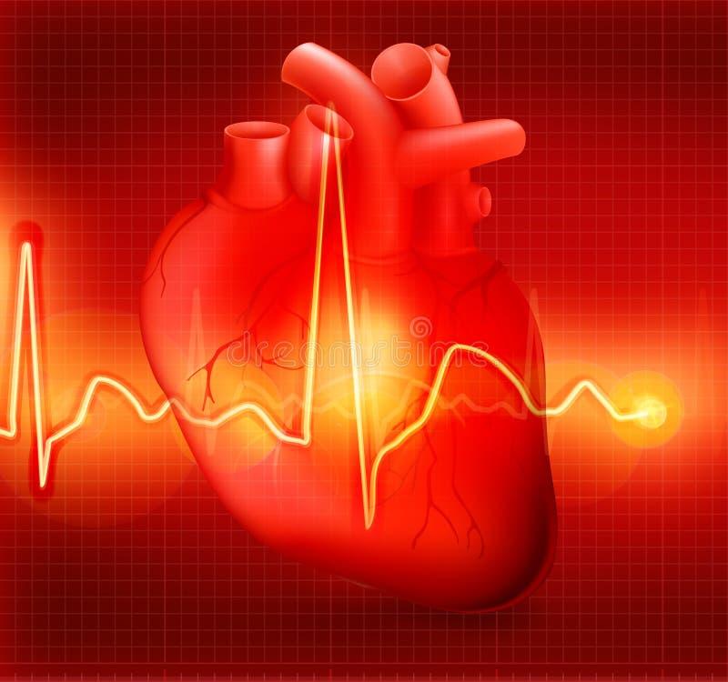 Het cardiogram van het hart stock illustratie