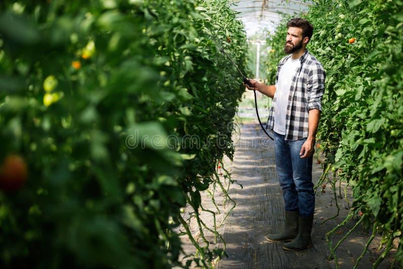 Het castreren van groenten met water of gewasbeschermingsmiddelen zoals pesticiden tegen ziekten stock foto