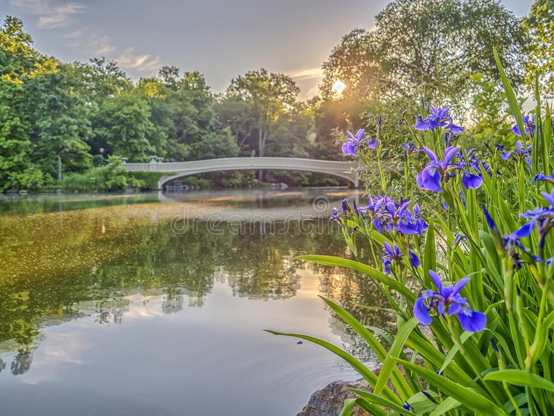 Het Central Park van de boogbrug stock foto