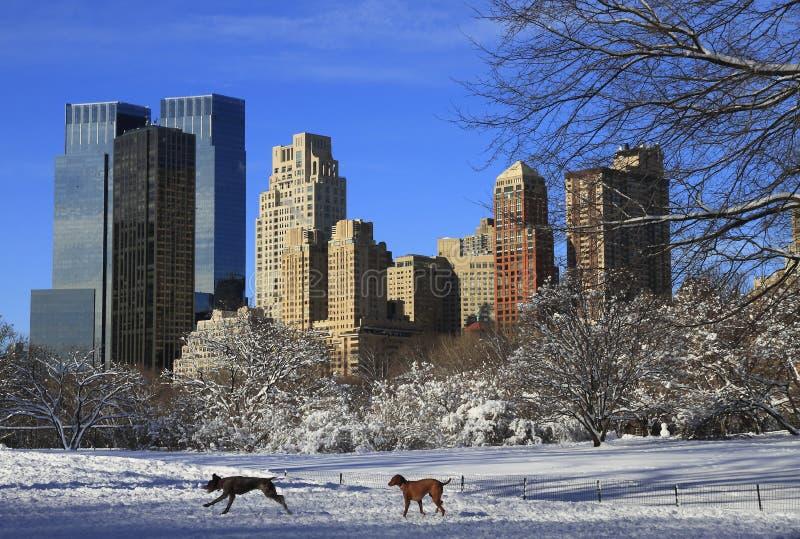 Het Central Park van New York na sneeuw royalty-vrije stock fotografie