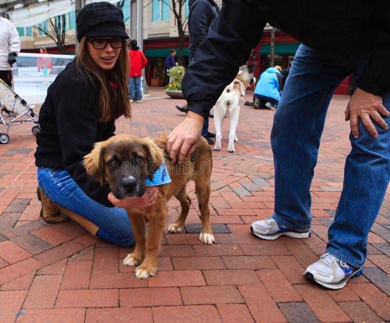 Het Centrum VA van de Stad van Reston van de Dag van de Goedkeuring van het huisdier stock fotografie