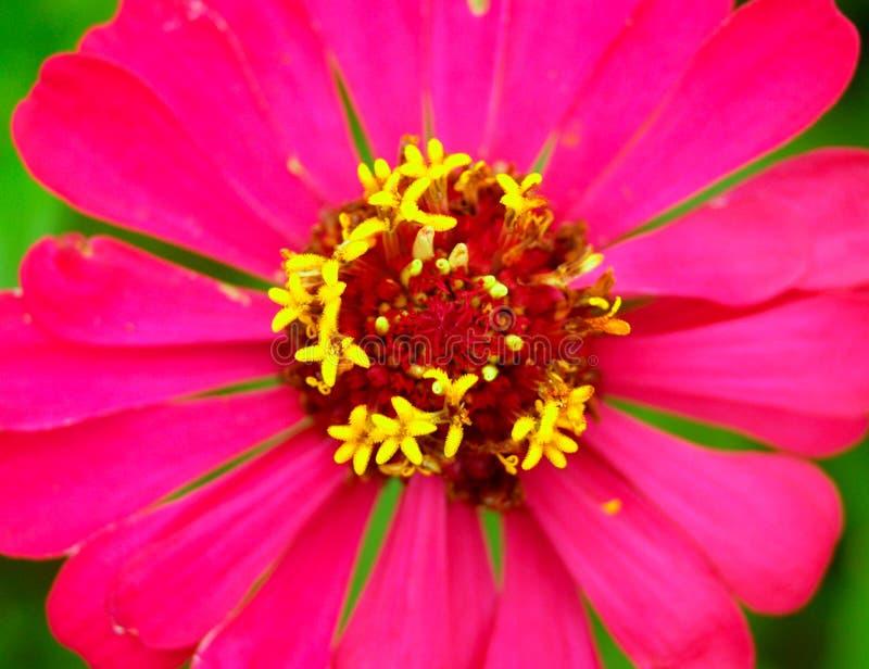 Het centrum van de bloem stock foto's