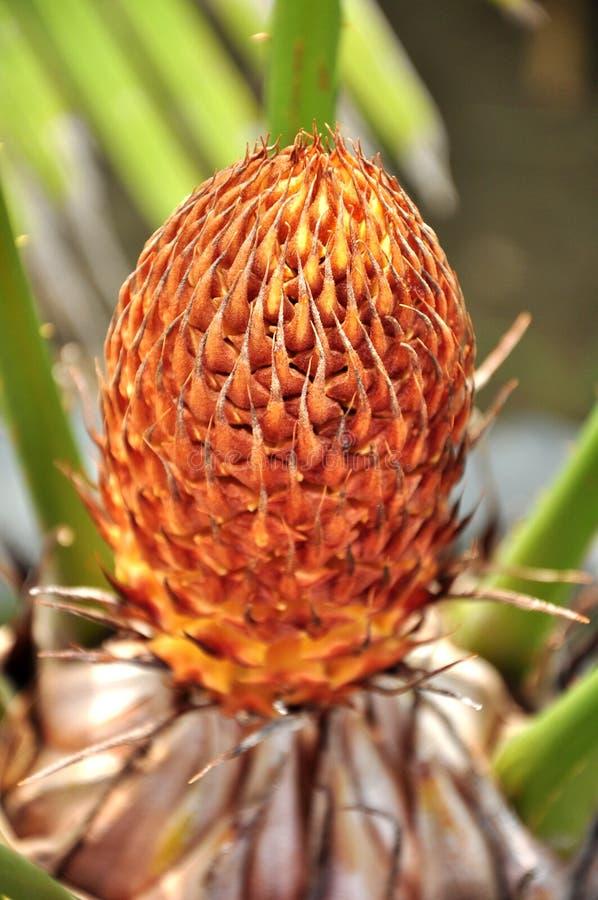 Het centrum van de palm royalty-vrije stock foto