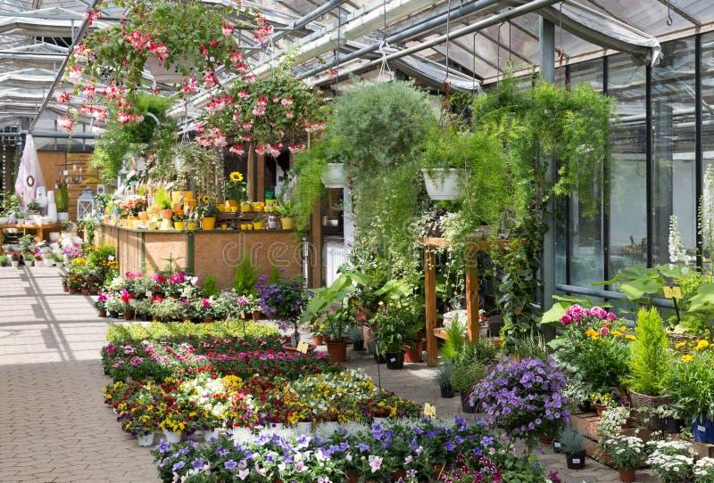 Het centrum verkopende installaties van de tuin in een serre stock foto