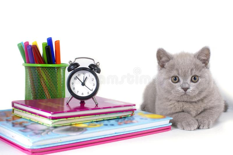Het charmante grijze pluizige Britse katje ligt, dichtbij de klok, boeken, potloden Onthaal aan school royalty-vrije stock afbeelding