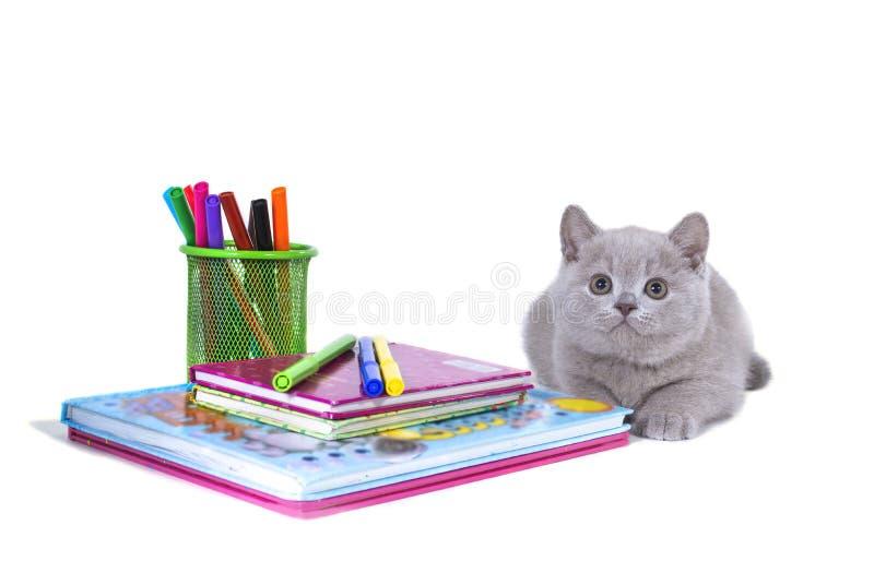 Het charmante grijze pluizige katje ligt, dichtbij de klok, boeken, potloden Onthaal aan school stock afbeeldingen