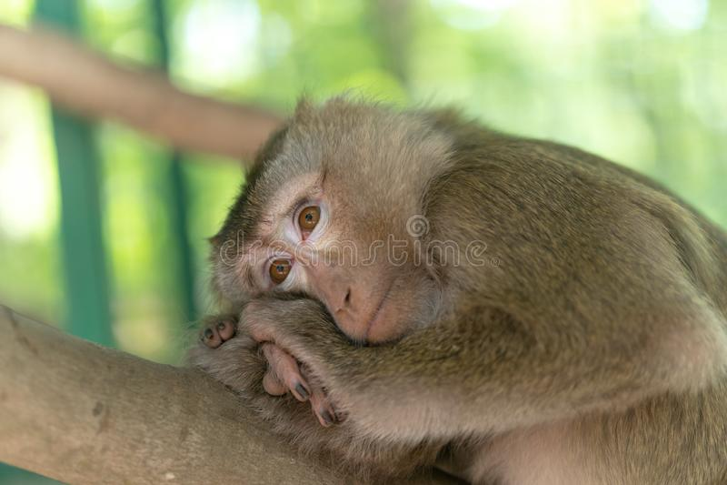 Het charmeren van weinig aap die op een boom in de schaduw van de zon rusten Dieren in de wildernis stock foto