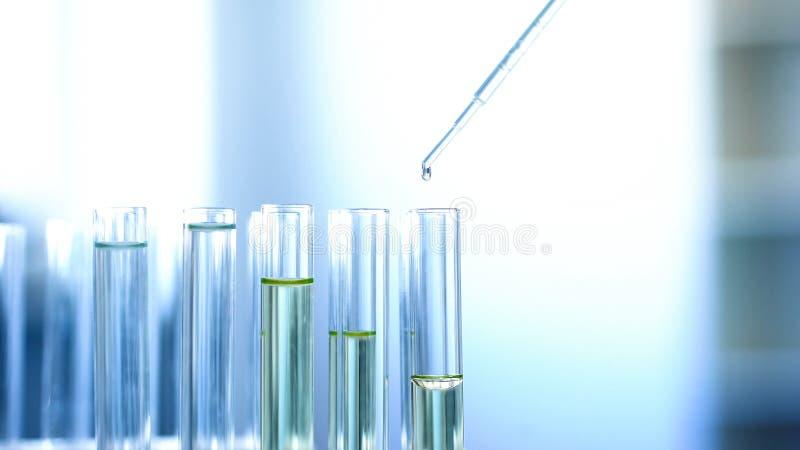 Het chemische vloeibare druipen van pipet in laboratoriumbuizen, die reactie, onderzoek controleren royalty-vrije stock afbeeldingen