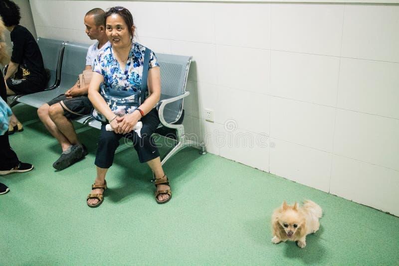 Het Chinese Huisdierenziekenhuis stock afbeeldingen