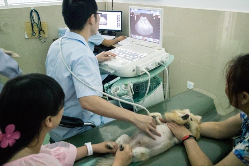 Het Chinese Huisdierenziekenhuis royalty-vrije stock fotografie