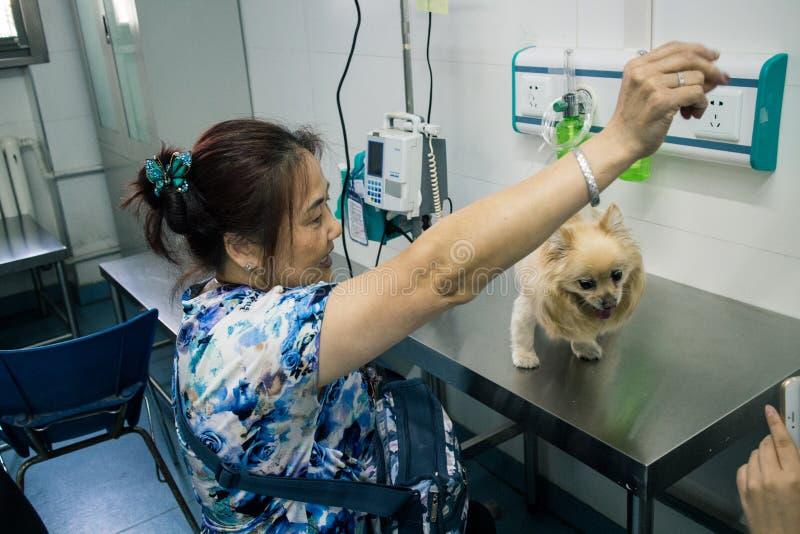 Het Chinese Huisdierenziekenhuis stock fotografie