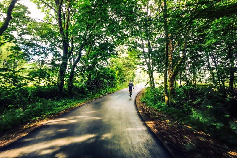 Het cirkelen door bos op weg stock foto