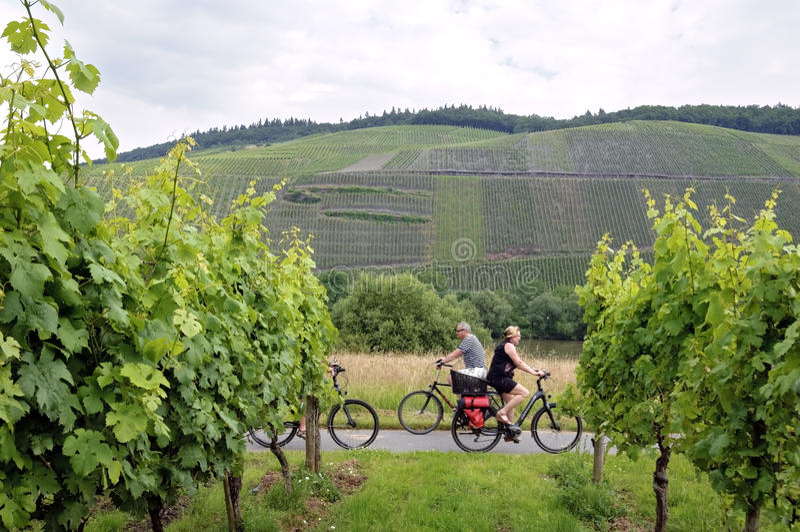 Het cirkelen vakantie langs wijngaarden op de rivier Moezel royalty-vrije stock foto's