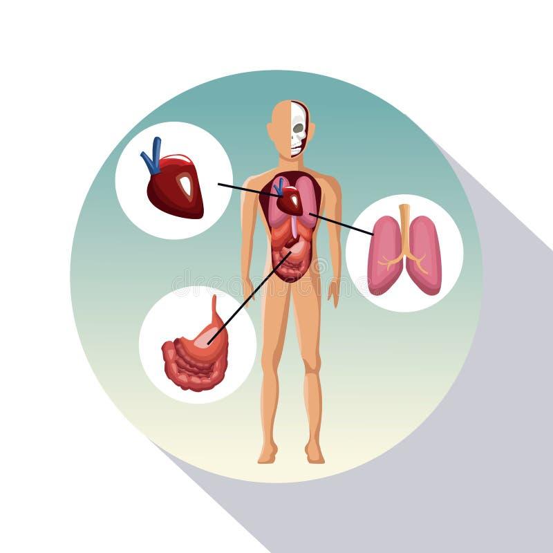 Het cirkelkader in de schaduw stellen van het menselijke lichaam van de afficheclose-up met systemen vector illustratie