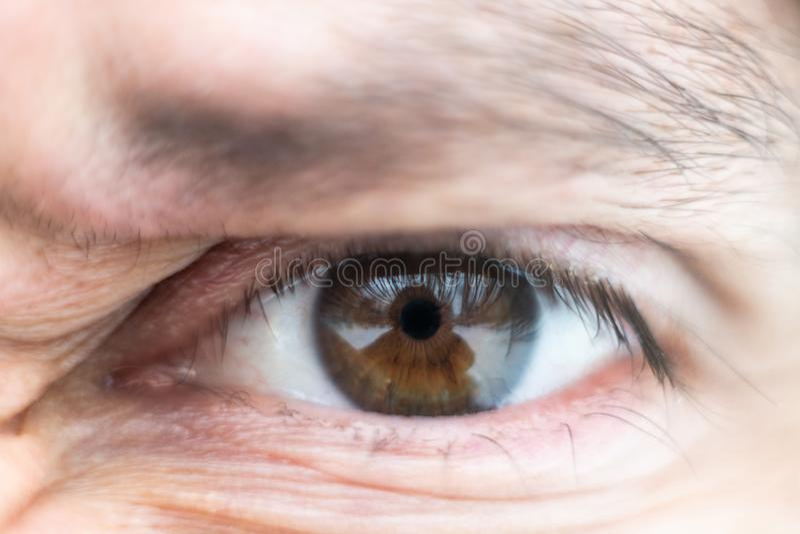 Het close-up op mannelijke bruin loenste wijd in woede royalty-vrije stock foto's