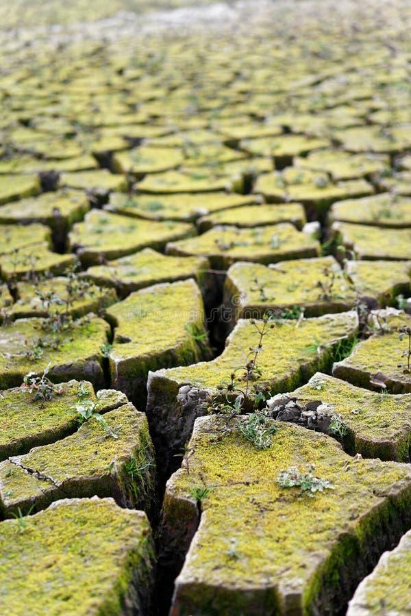 Het close-up van de bodem van een droog meer, heeft de aarde in grote ijsschollen verdeeld, zijn de kleine installaties gegroeid, stock afbeelding