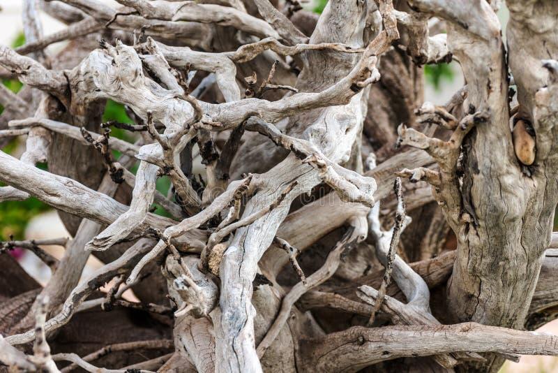 Het Close-up van het drijfhout royalty-vrije stock fotografie