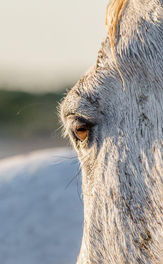 Het Close-up van het paardoog Het paard van Camargue Parc Regional DE Camargue frankrijk De Provence royalty-vrije stock fotografie