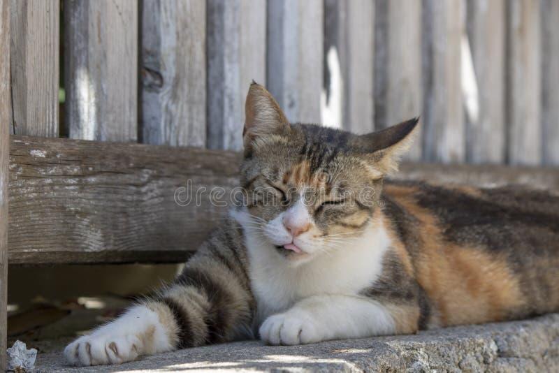 Het close-up van het kattengezicht Het slaperige ogen kijken royalty-vrije stock foto's