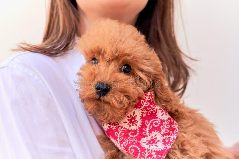 Het close-up weinig jonge hond ligt op borst van meester stock fotografie