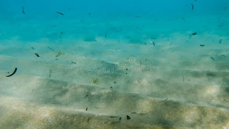 Het close-upbeeld van vuile zandige overzeese bodem met veel dode overzees wiedt het stromen in het water stock afbeeldingen