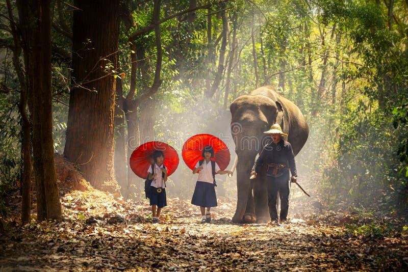 Het communautaire leven Schoolkinderen en olifanten De student Aziatisch weinig fokt olifanten, het District van Tha Tum, Surin,  stock afbeelding
