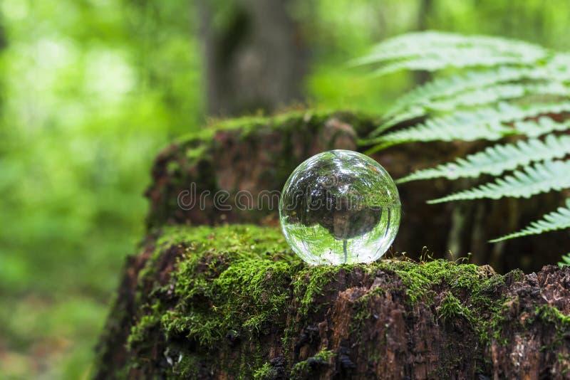 Het concept aard, groene boskristallen bol op een houten stomp met bladeren Glasbal op een houten die stomp met mos wordt behande stock afbeeldingen