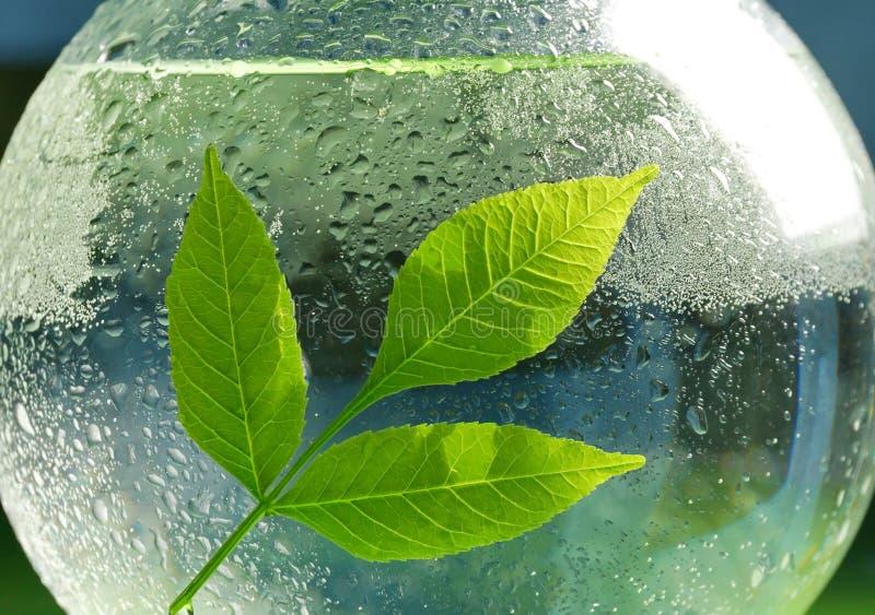 Het concept ecologie een tak van groen bladeren en water in a royalty-vrije stock afbeeldingen