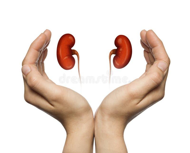 Het concept gezonde nieren stock illustratie