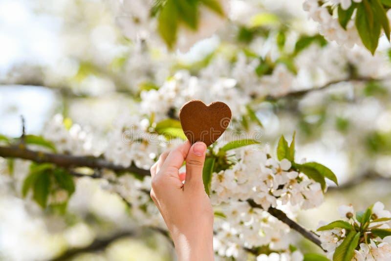 Het concept liefde voor aard De zomerbloei Behandel aard stock afbeeldingen