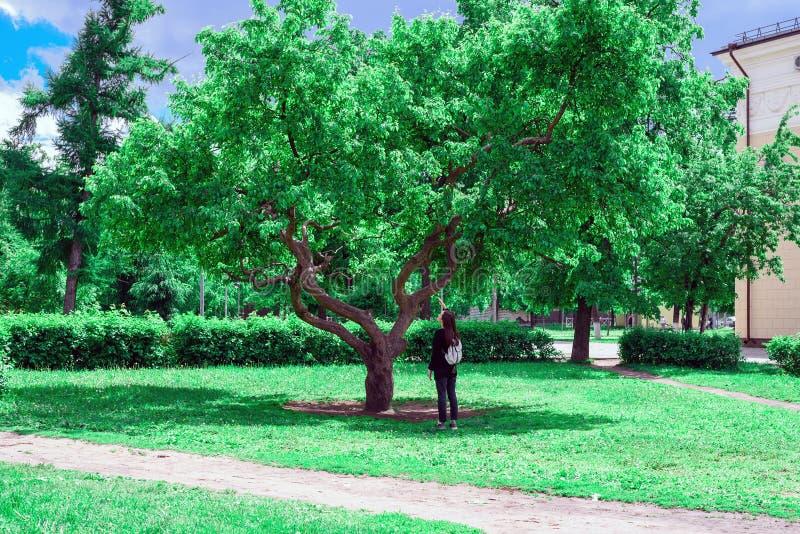 Het concept natuurbescherming, ecologie, liefde van aard een bekijkt de jonge vrouwentribunes onder een grote groene boom en omho stock afbeeldingen