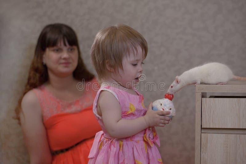 Het concept traktaties Een klein meisje voedt een rat met een cupcake stock foto
