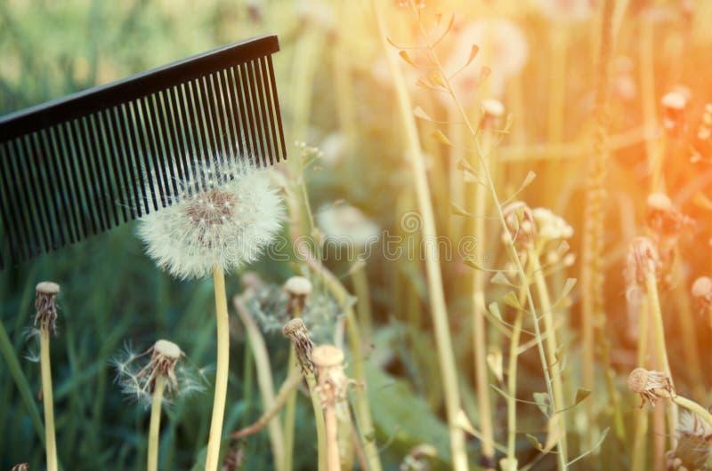 Het concept van het alopeciaprobleem royalty-vrije stock fotografie
