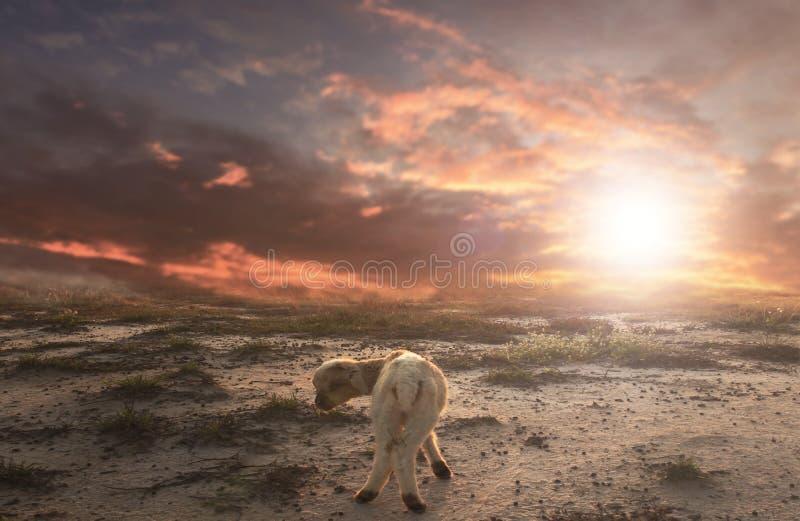 Het Concept van het bijbelverhaal: Verloren Lam royalty-vrije illustratie