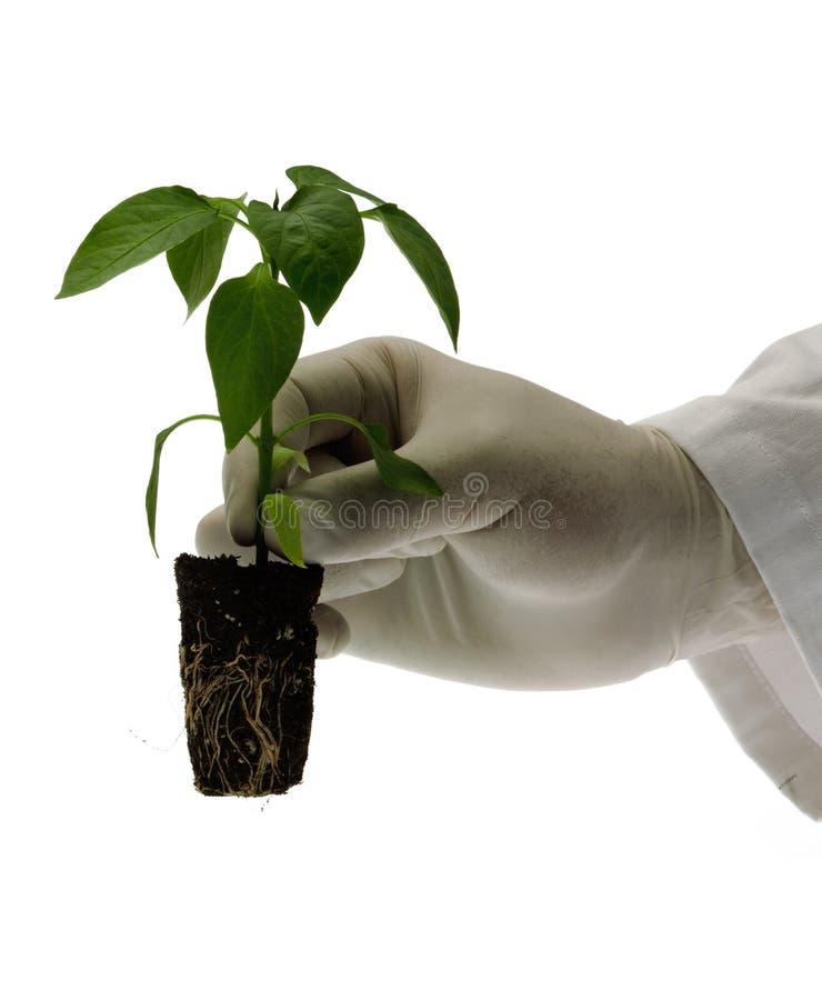 Het concept van de biotechnologie stock afbeelding