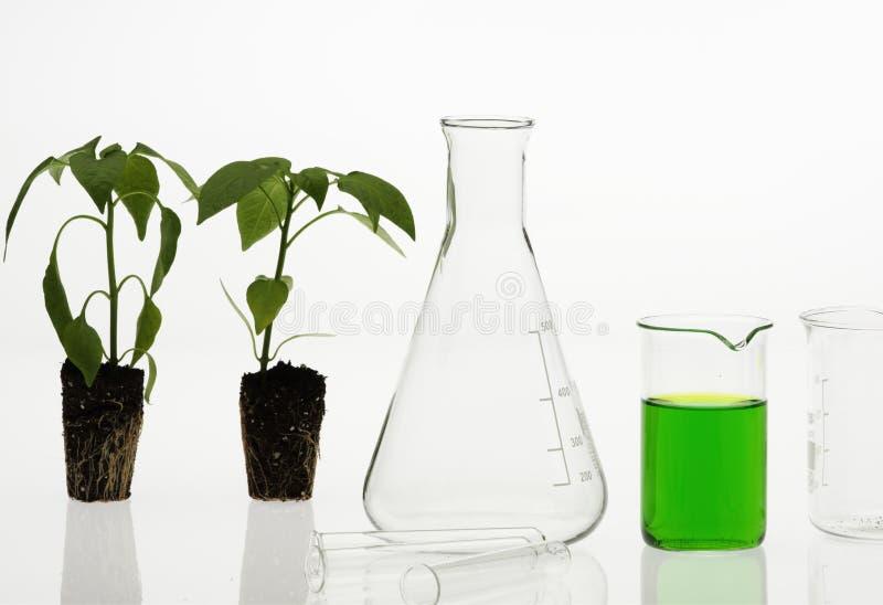 Het concept van de biotechnologie royalty-vrije stock foto's