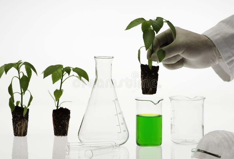 Het concept van de biotechnologie stock afbeeldingen