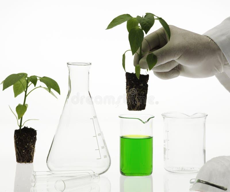 Het concept van de biotechnologie royalty-vrije stock afbeelding