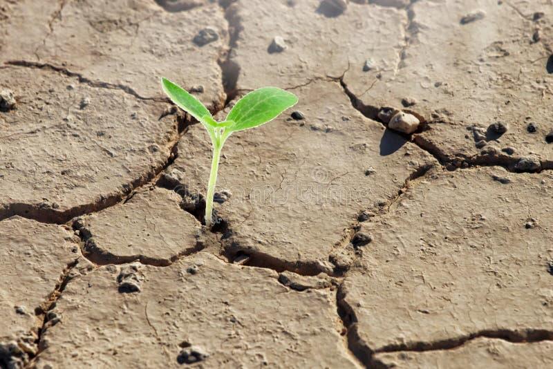 Het concept van de ecologie Het toenemen spruit op droge grond Macht van aard royalty-vrije stock afbeelding